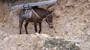 馬兒已經習慣了,大石頭不用趕自己拉上山上