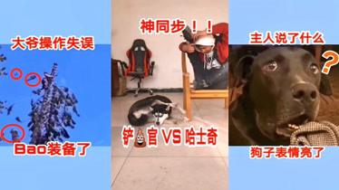 搞笑动物:我铲屎官说了什么话,二狗子的表情